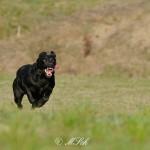 Hunde_077