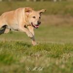 Hunde_078