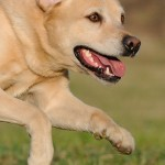 Hunde_079