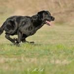 Hunde_080