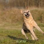 Hunde_081