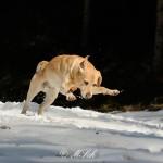 Hunde_082