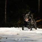 Hunde_083
