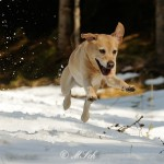 Hunde_084