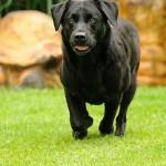 Hunde_086