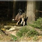 Woodquarter Gundog's Anik_05