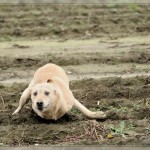 einer Robbe wachsen Beine???