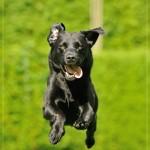 640_2014-08-24_05 Hunde