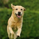 640_2014-08-24_07 Hunde