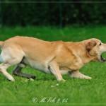 640_2014-08-24_09 Hunde