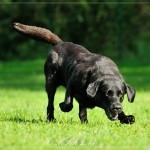 640_2014-08-24_10 Hunde