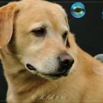 2014-10-08_2014-10-05 Hunde_47